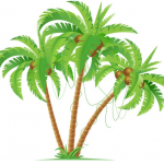 Link tải: Lá dừa vector, PNG, PSD miễn phí mới nhất